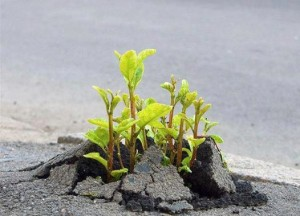 sprout-asphalt