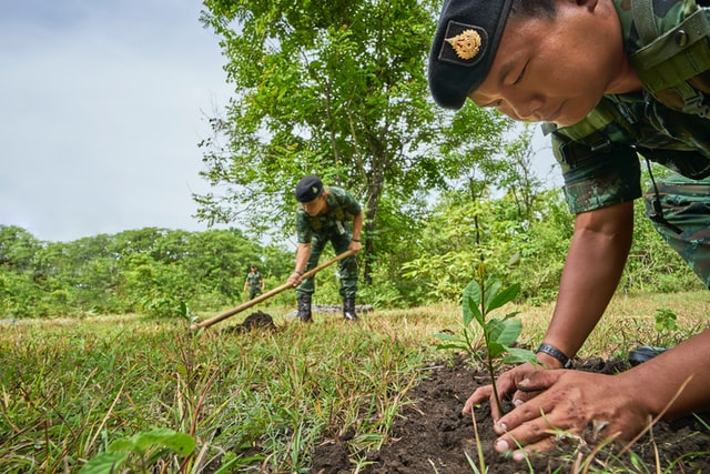 soldier planting a tree